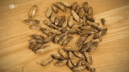 ZDF Insect Bread