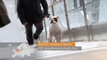 ZDF Dog Toilets at Helsinki Airport